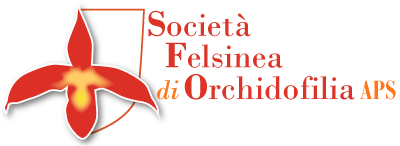 Società Felsinea di Orchidofilia